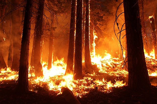 Wildfires and Fire Gel: Causes, Effects and the Solution!